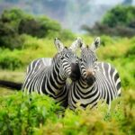 Wildebeest Migration and a Rich Cultural Experience in Tanzania with AA Africa
